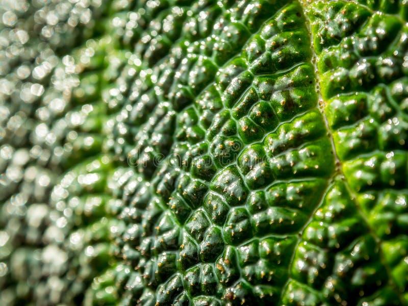 Макрос зеленых лист как предпосылка стоковое изображение