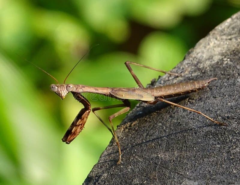 Макрос зуммера - насекомое стоковые фото