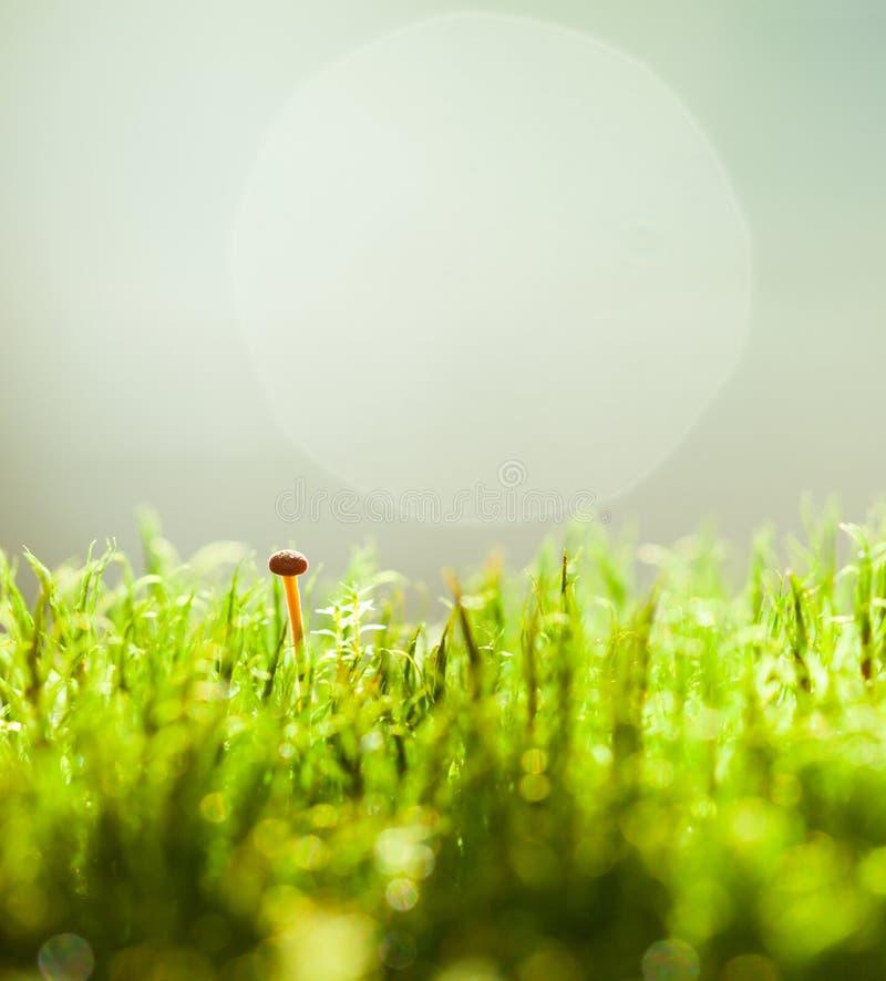 Макрос крошечного гриба стоковое изображение