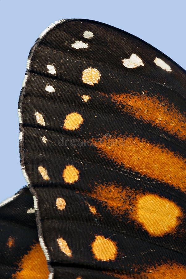 Макрос крыла бабочки монарха стоковое фото
