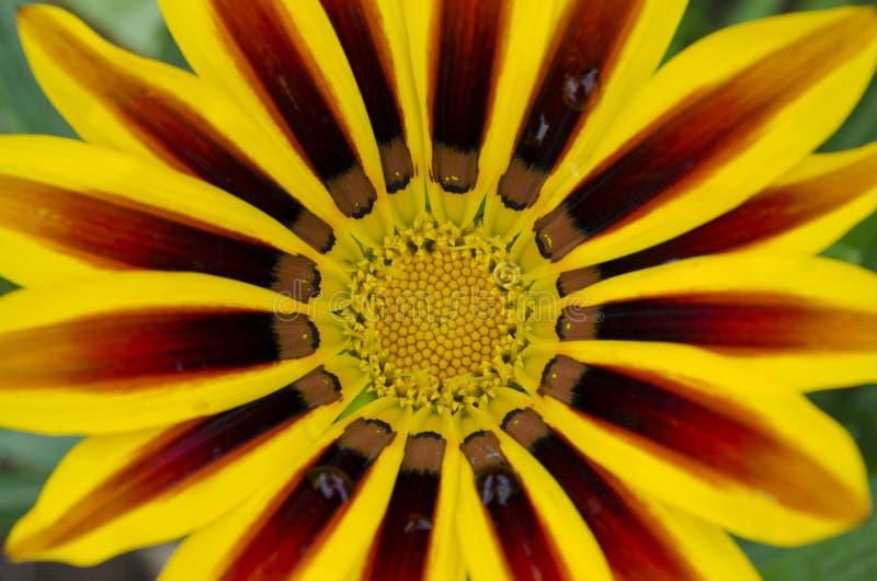 Макрос к дикому растению стоковое изображение