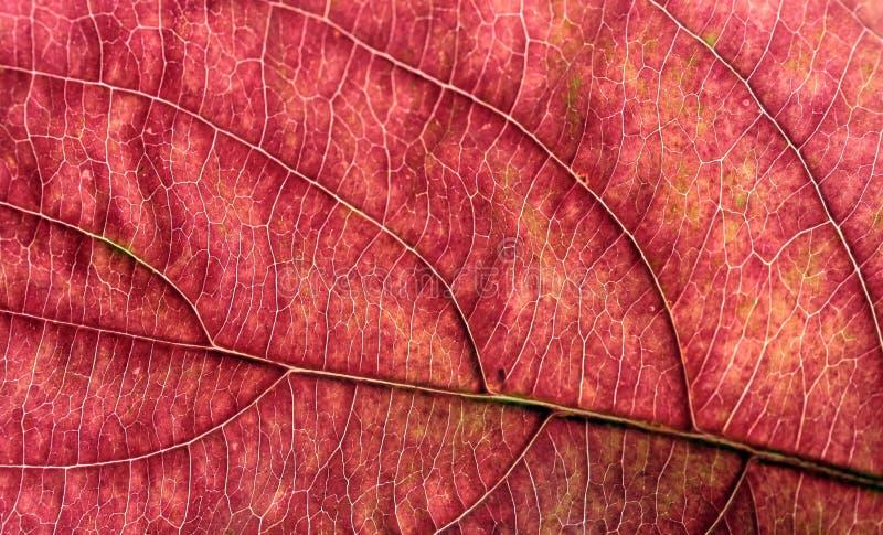 макрос листьев autum стоковая фотография rf