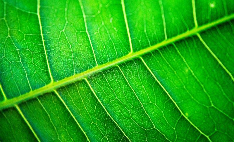 Макрос лист-вен стоковые фото