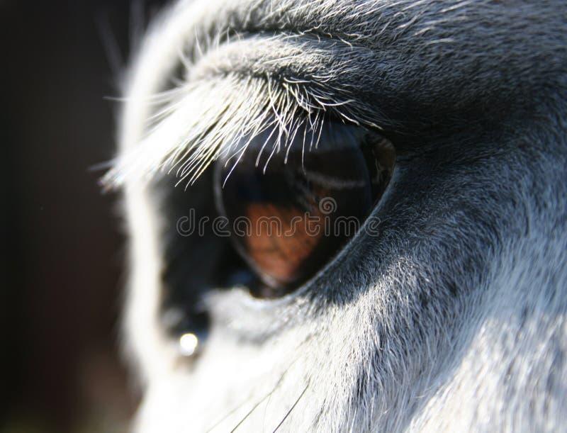 макрос лошади глаза стоковые фото