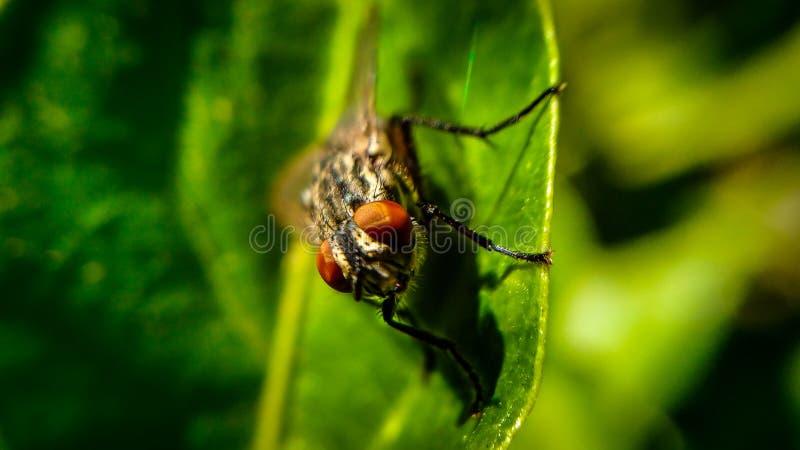 Макрос мухы на лист стоковая фотография rf