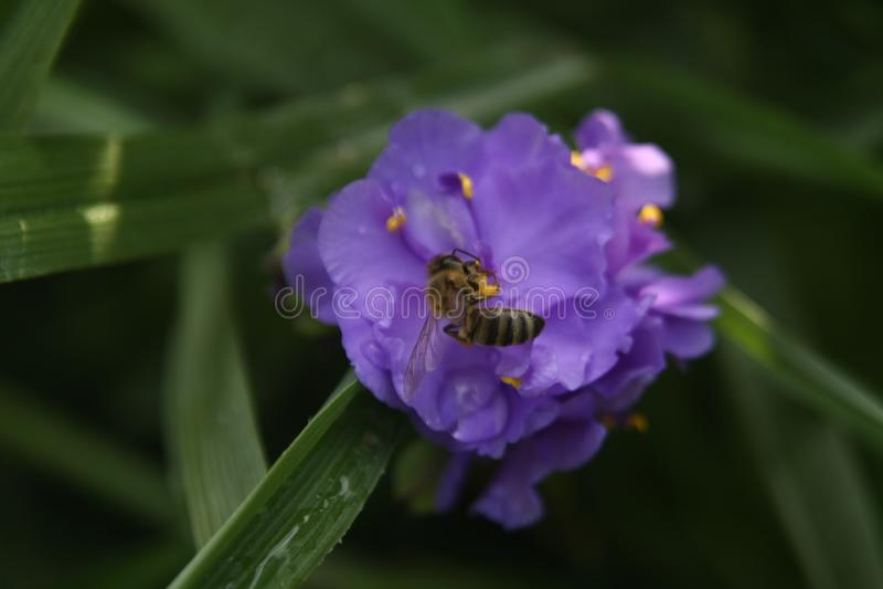 Макрос на пурпурном цветке с предпосылкой нерезкости стоковое изображение rf