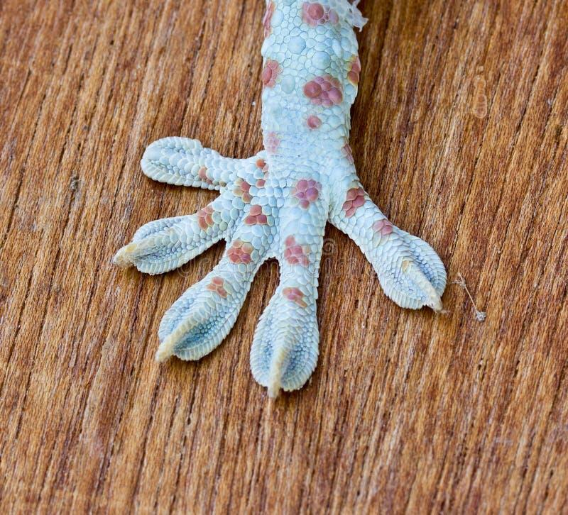 Макрос ноги стоковое фото