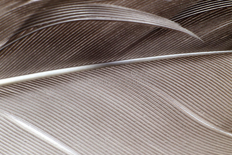 Макрос пера стоковая фотография rf