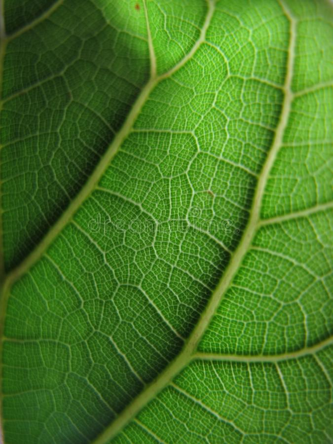Макрос снял лист дерева, зеленого цвета, около, природа стоковое фото rf
