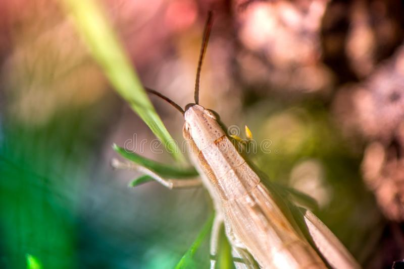 Макрос снятый кузнечика, уловленный пока выбирающ грибы и клюквы в лесе в предыдущей осени стоковое изображение