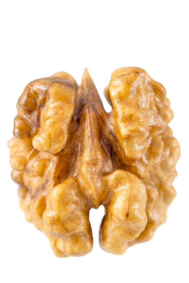 Макрос стерженя грецкого ореха стоковое изображение rf