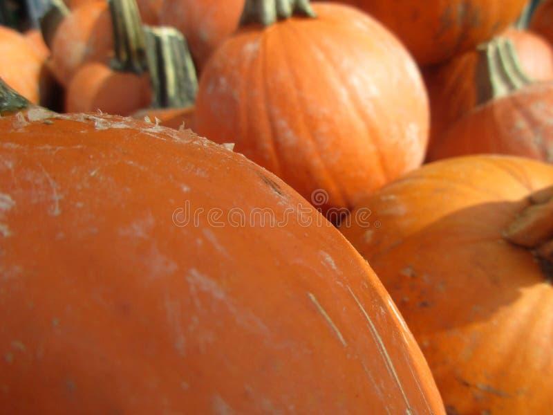 Макрос тыквы стоковая фотография