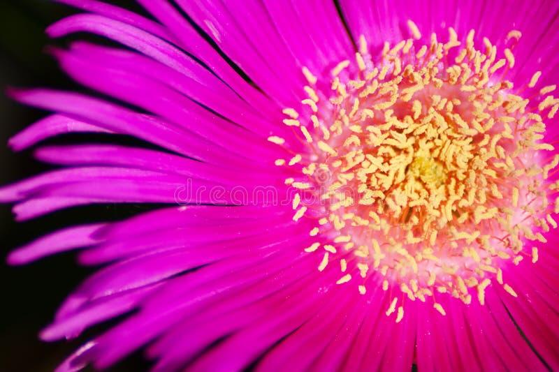 макрос цветка стоковые изображения rf