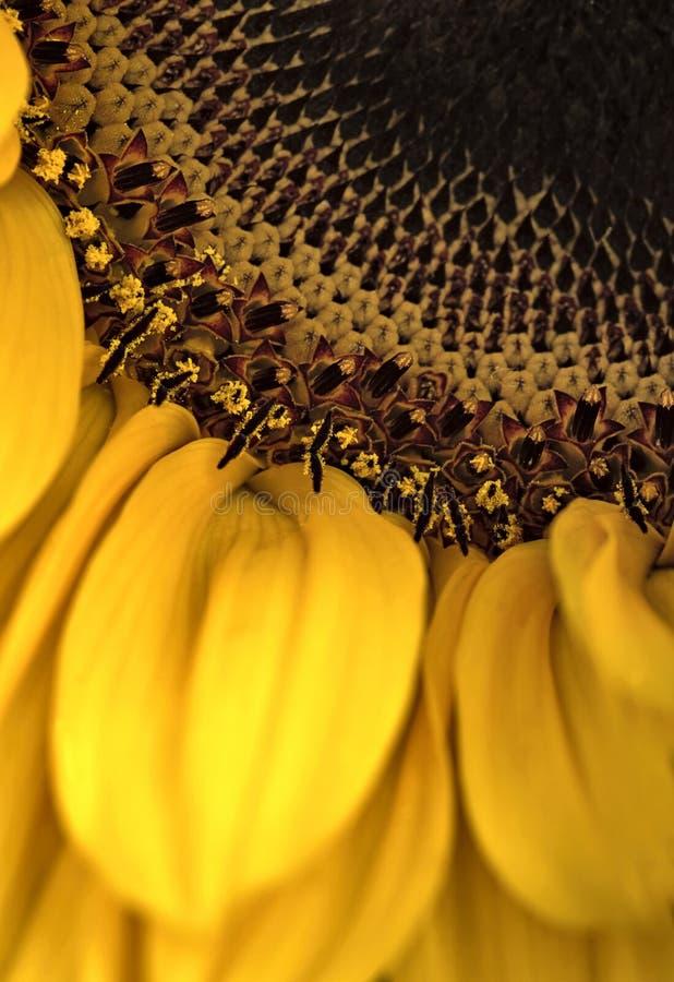 макрос цветка стоковое фото