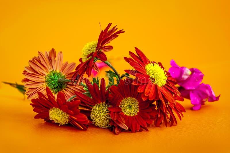 Макрос цветка Gerber стоковое изображение
