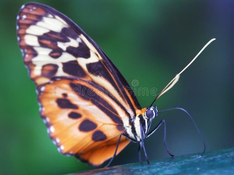 макрос 2 бабочек стоковое изображение