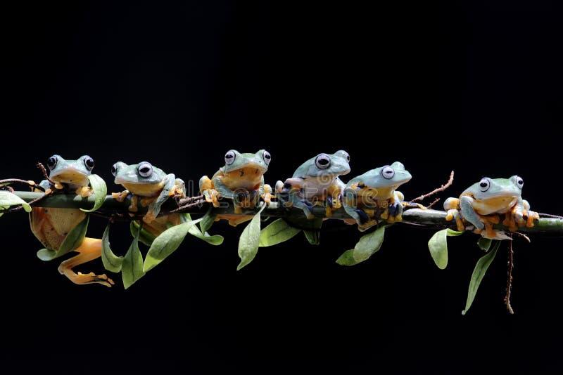 Макрос, bokeh, насекомое, млекопитающие, природа, цветки, черно-белые стоковое изображение