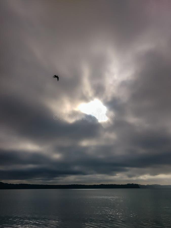 Максимум вверх на утре overcast стоковое фото