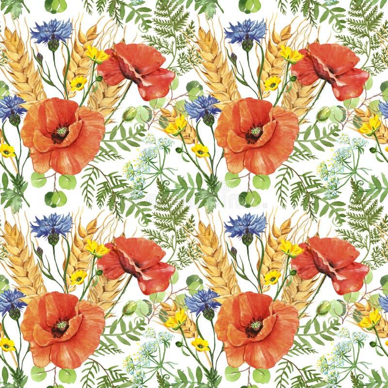 Мак и пшеница акварели красные в картине луга безшовной на белой предпосылке Печать полевых цветков ботаническая иллюстрация вектора