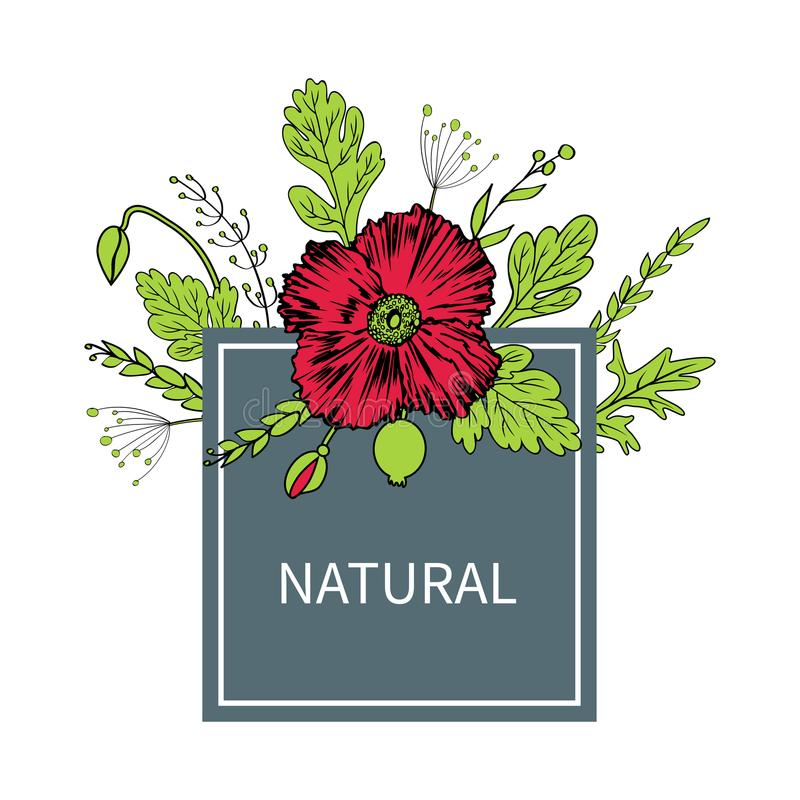 Мак цветет, отпочковывается, рамка листьев флористическая квадратная изолированная на белой предпосылке, руке нарисованный эскиз  иллюстрация вектора