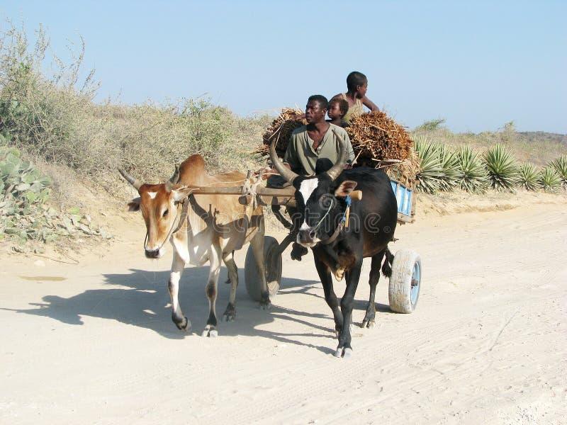 Малагасийская перевозка стоковая фотография rf