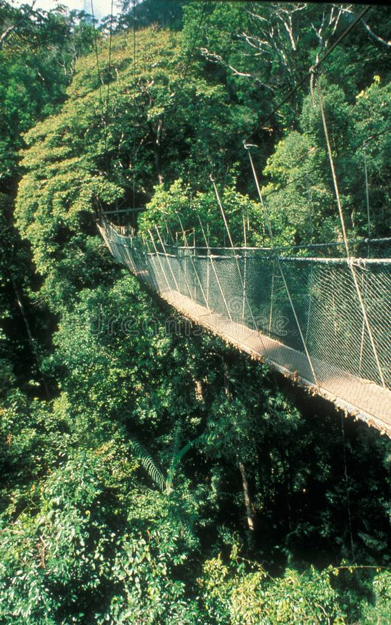 Малайзия: Идти за вися мост над Tam стоковое фото
