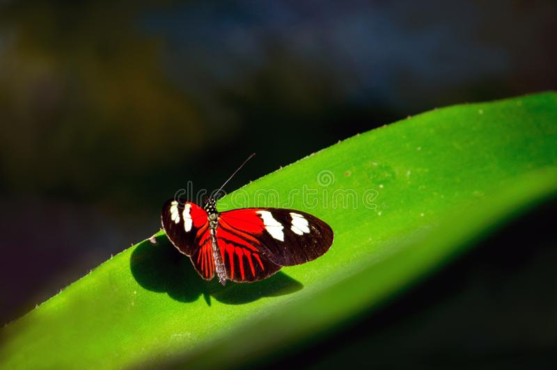 Малая бабочка почтальона в солнце стоковое фото
