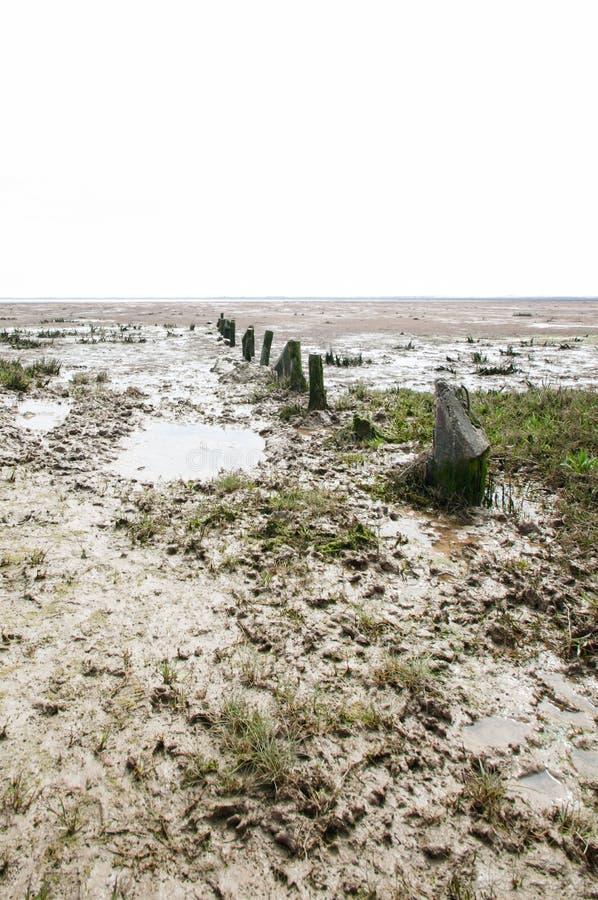 Малая вода на тинном пляже стоковое изображение rf