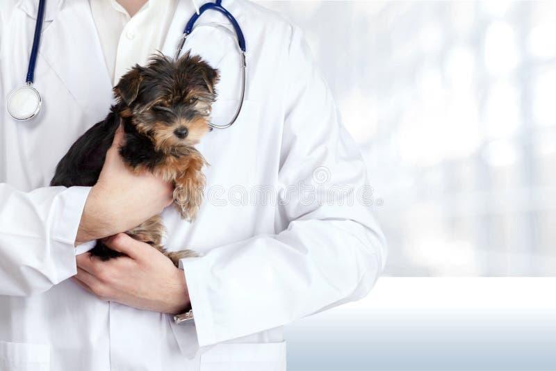 Малая милая собака расмотренная на ветеринарном докторе стоковые изображения