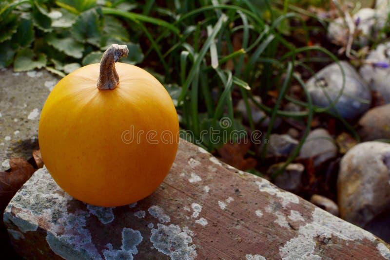 Малая оранжевая тыква на выдержанной кирпичной стене стоковое изображение