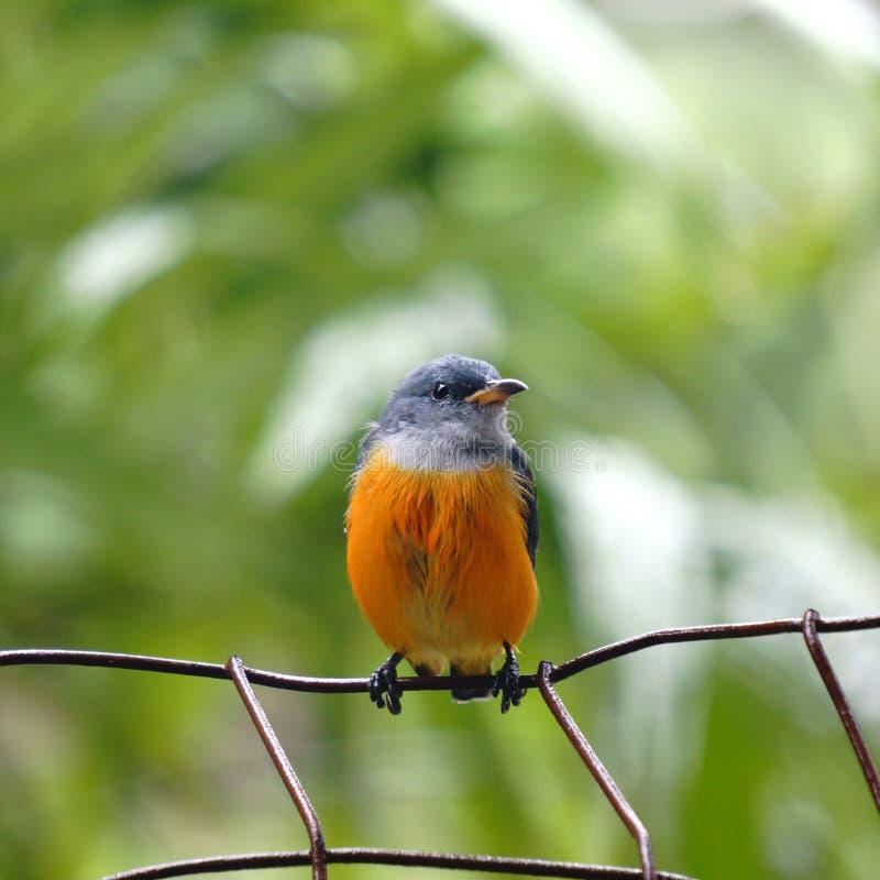 Малая птица стоковая фотография rf