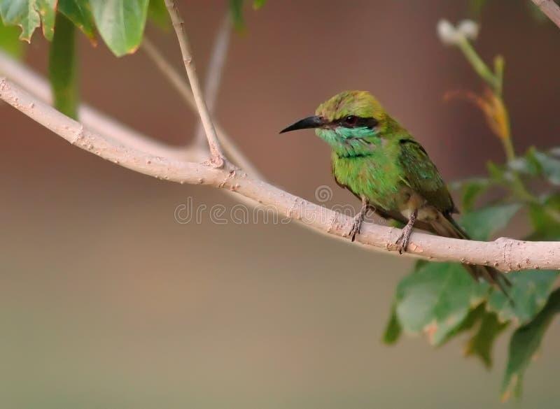 Малая птица стоковые изображения rf