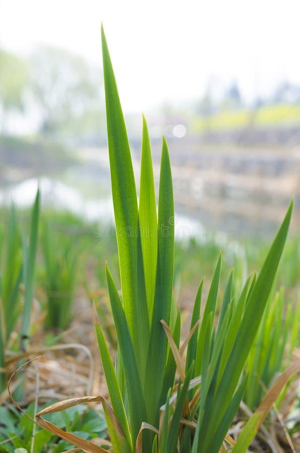 Малая трава весной стоковые изображения rf