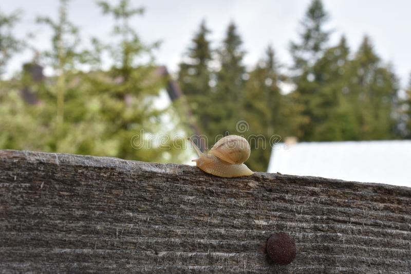 Малая улитка на деревянной загородке стоковые изображения