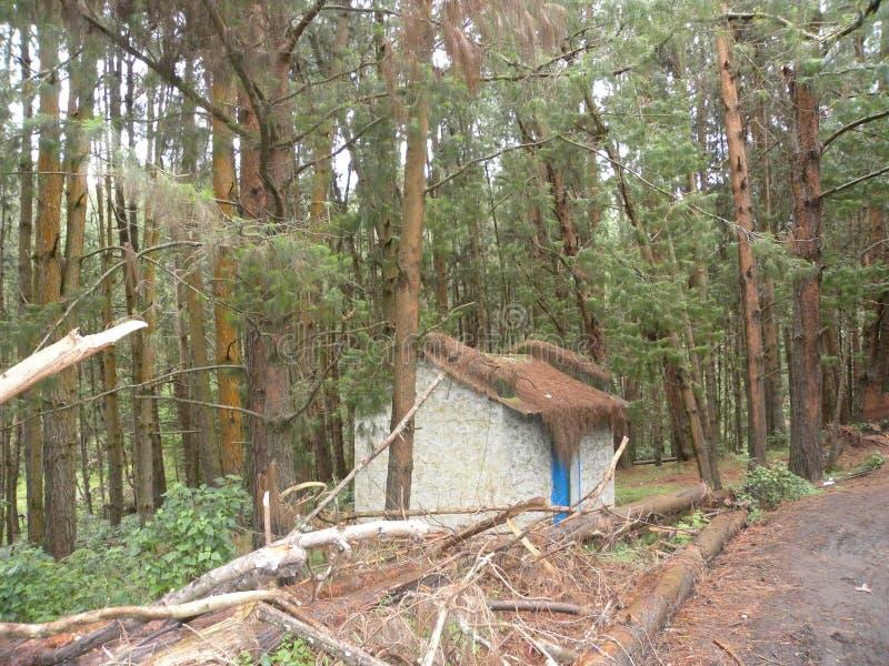 Малая хата коттеджа в сосновом лесе с плотными соснами стоковое изображение rf