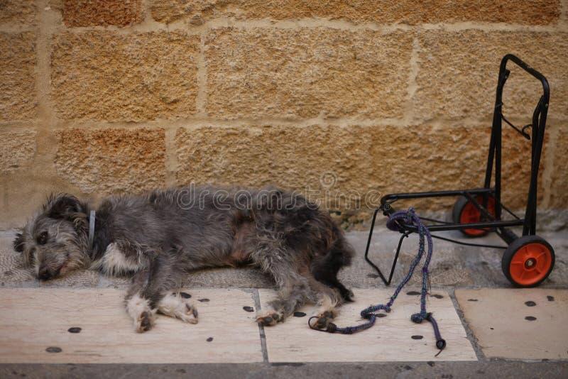 Малая shaggy собака спит на мостоваой стоковые изображения