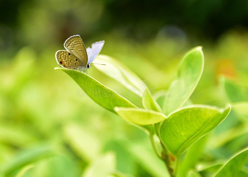 Маленькая бабочка, зажатая на вершине светло-зеленого отпуска стоковые фото