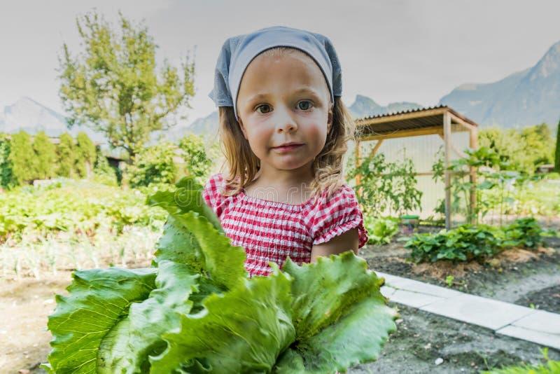 Маленькая девочка гордо держа органический салат она как раз сжала от ее заплаты овоща стоковые изображения