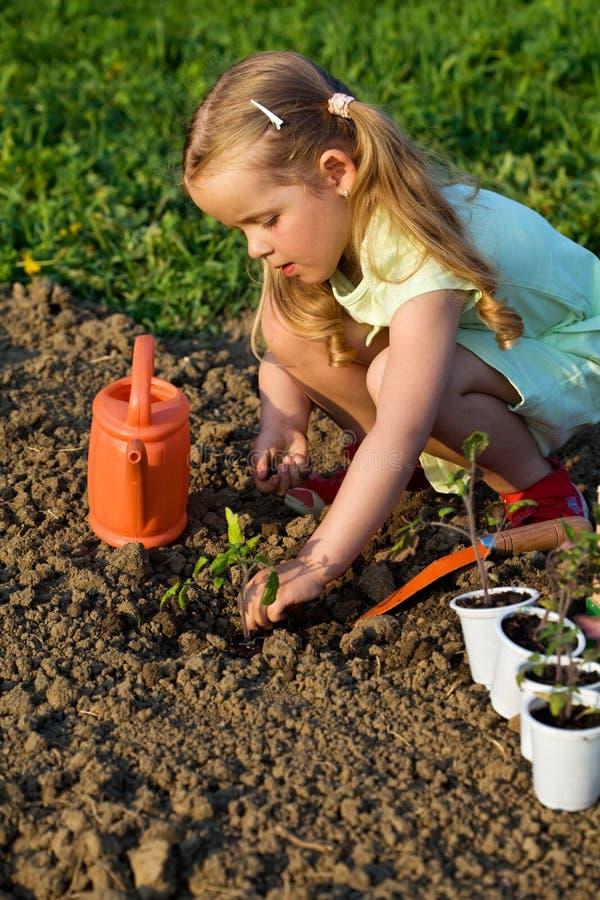 Маленькая девочка засаживая сеянцы томата стоковое фото rf