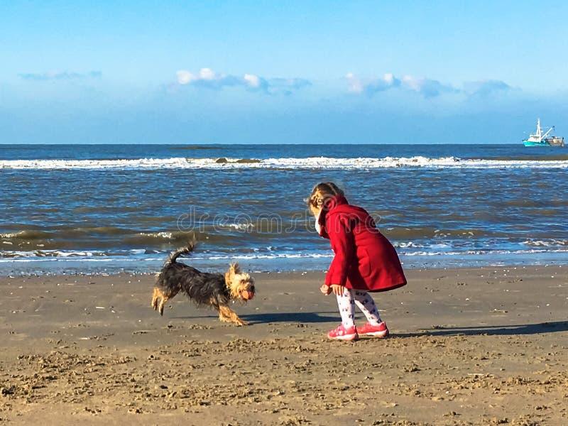 Маленькая девочка играет с собакой на пляже стоковое фото rf