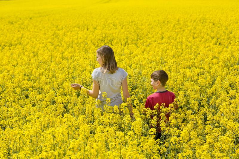 Маленькая девочка и мальчик, брат и сестра наслаждаются природой Они идут среди желтого цветистого поля стоковая фотография