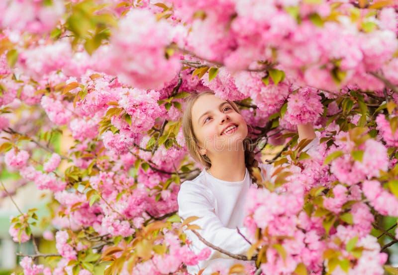 Маленькая девочка наслаждается весной Ребенк наслаждаясь розовым вишневым цветом m Пинк girlish цвет Яркий и стоковое изображение rf