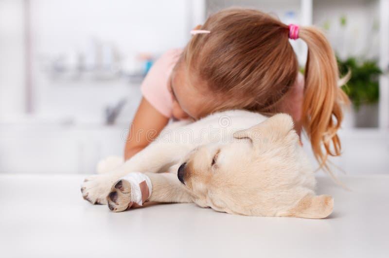 Маленькая девочка обнимая ее раненую собаку щенка labrador на veteri стоковые изображения rf