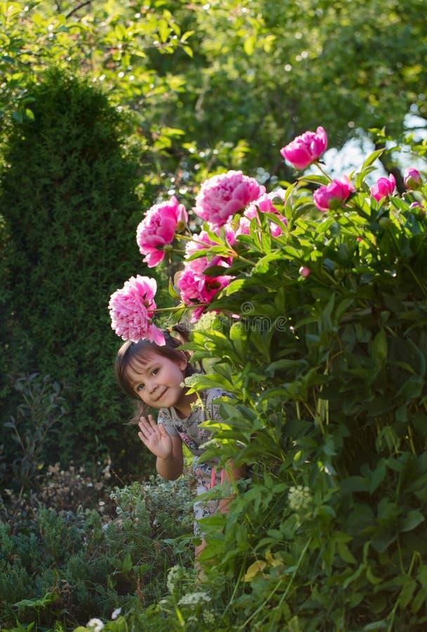Маленькая девочка пряча в саде за кустами пиона стоковое фото