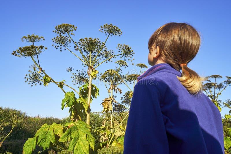 Маленькая девочка стоя перед hogweed гигантом стоковое изображение