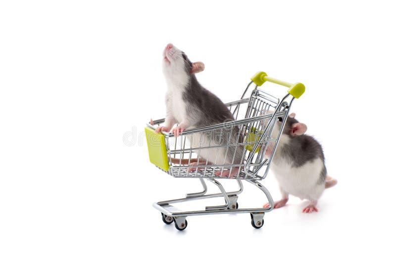 Маленькая крыса свертывает его родственника в покупая тележке стоковое изображение rf