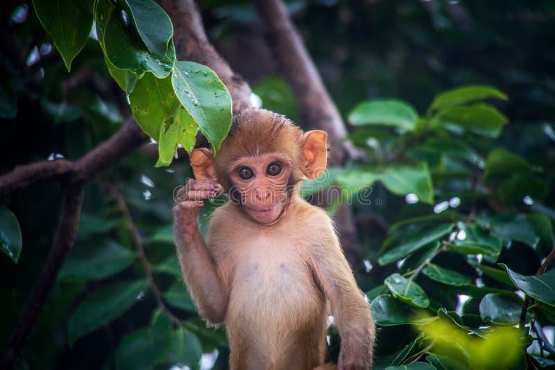 маленькая обезьянка улыбается в кустах стоковое изображение rf