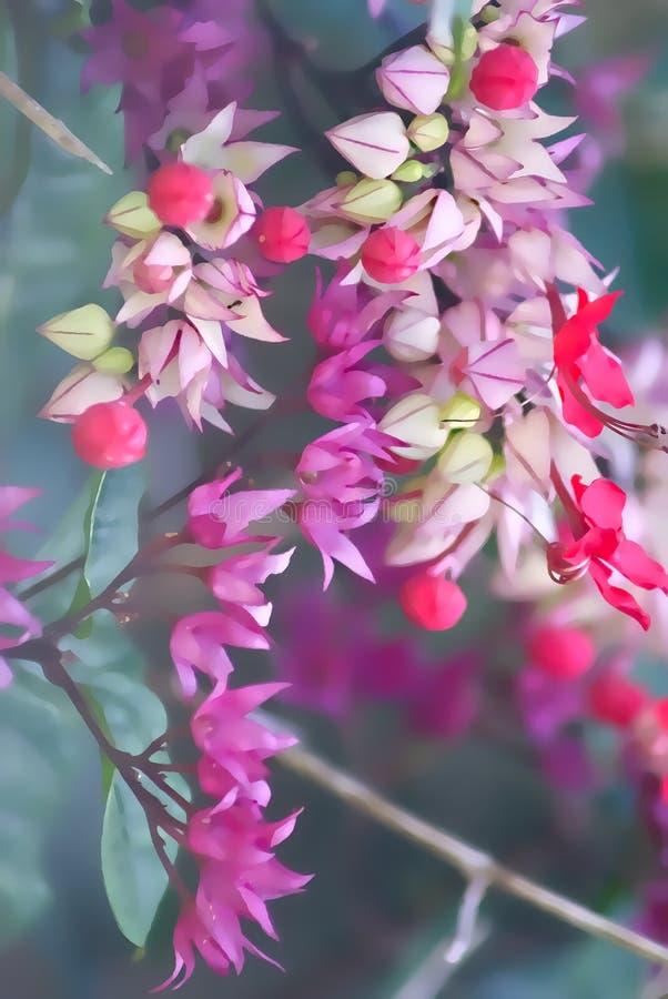 Маленькая пинк и пурпурные цветки стоковое фото rf