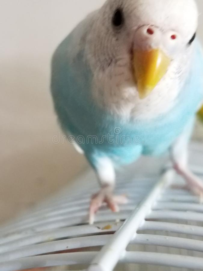 маленькая пташка стоковое изображение