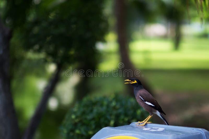 Маленькая птица в общественном парке стоковое фото